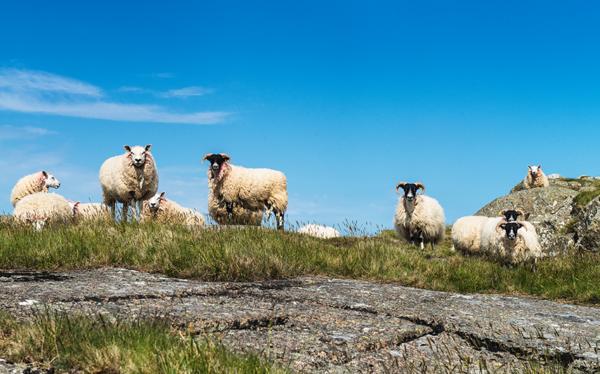 Irlands historischer Osten: Eine Reise durch die Zeit für Gross und Klein